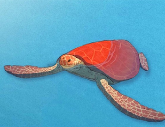 The Red Turtle a Feature Film Review